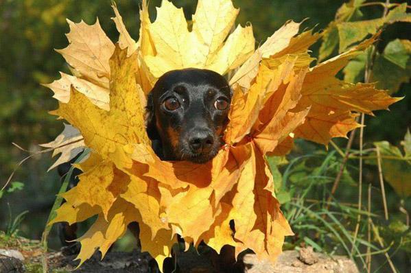 про осень смешные картинки