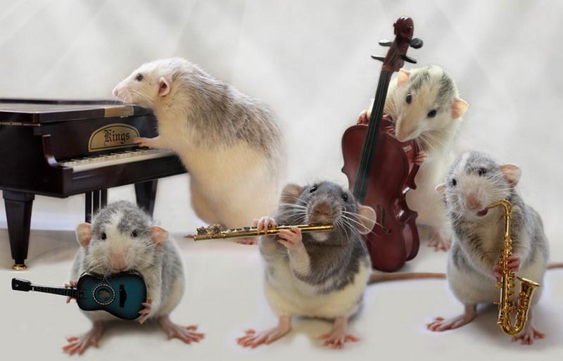 крысы с музыкальными инструментами