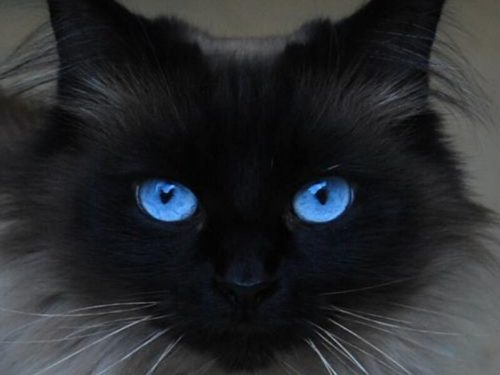кошачий взгляд