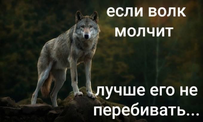Если волк молчи, лучше его не перебивать