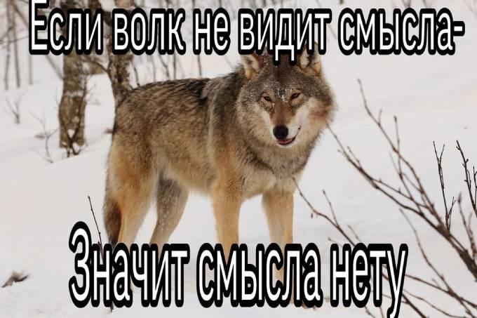 Если волк не видит смысла, значит смысла нету