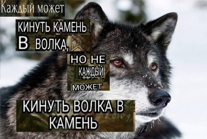 Каждый может кинуть камень в волка, но не каждый может кинуть волка в камень