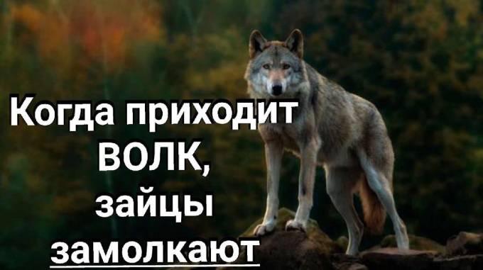 Когда приходит волк, зайцы замолкают