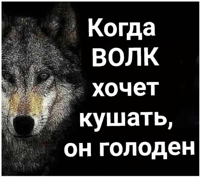 Когда волк хочет кушать, он голоден