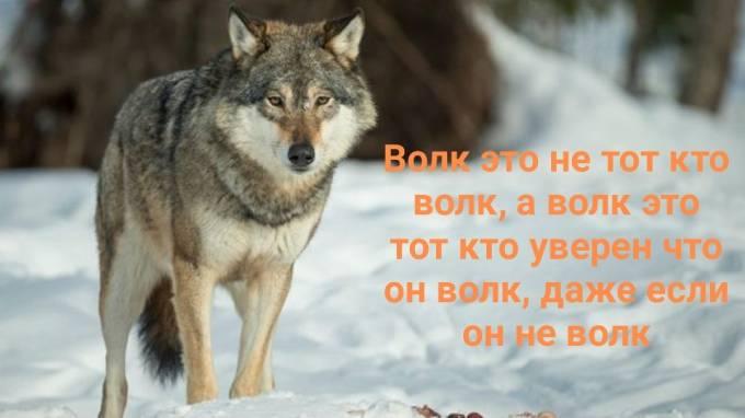 Волк не тот, кто волк