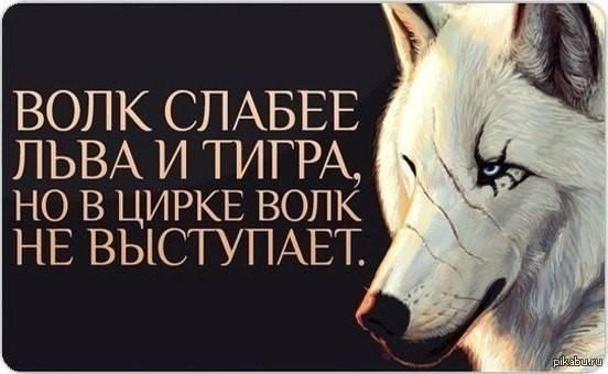 Волк слабее льва и тигра, но в цирке волк не выступает