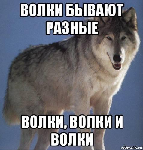 Волки бывают разные