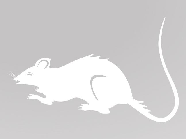 Трафарет крысы 2020