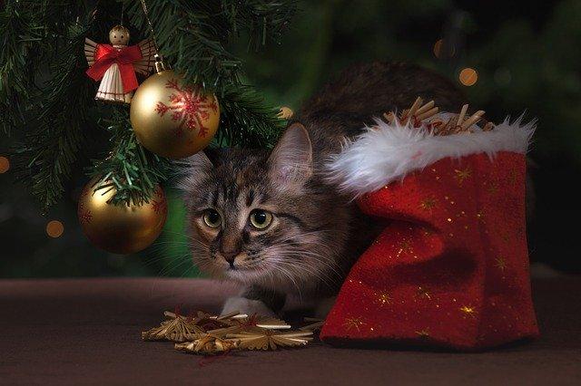 Новый год кот в мешке